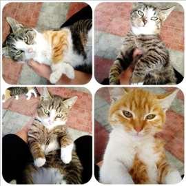 4 prelepe mace traže dom