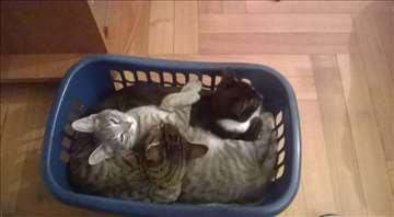 Prelepe mace traže dom :)