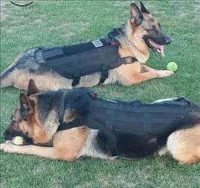 Takticki prsuk za pse