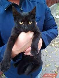 Poklanja se mlada, lepa crna maca