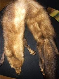 Lisica od pravog krzna