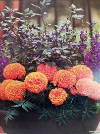 Prodaja cveća za 8. mart