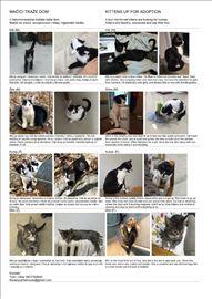 Mačići traže dom / kittens up for adoption
