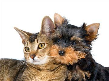 Čuvanje kućnih ljubimaca
