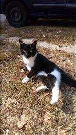 Ana - pitoma maca iz kraja trazi dom