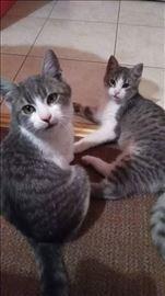 Maki i Flekica- sestre traze zajednicki dom