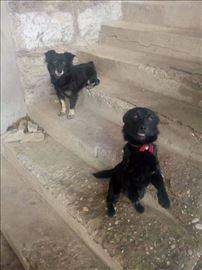 Nejla i Nuna- male rastom- traze domove