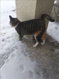 Prelepa, mlada, sterilisana maca