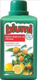 Blumi citrusi