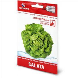 Salata ATRAKCIJA seme
