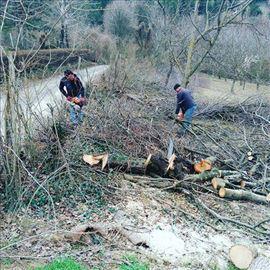Beograd i cela Srbija, krečenje, obaranje stabala