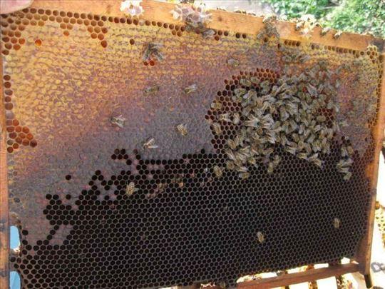 Košnice sa pčelama