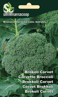 Brokoli Corvet seme