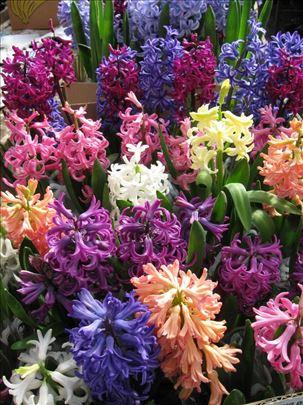 Prodaja cveća