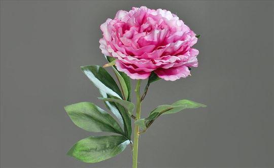 Bozur rozi -Seme-Kralj cveca