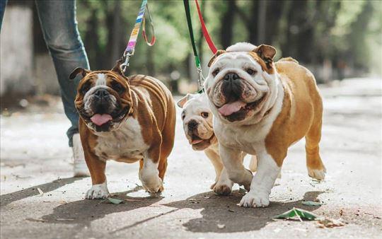 Šetanje, čuvanje i nega pasa