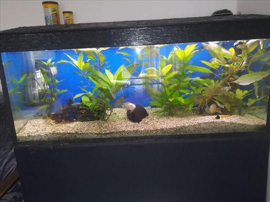 Prodfajem akvarijum,cena po dogovoru.
