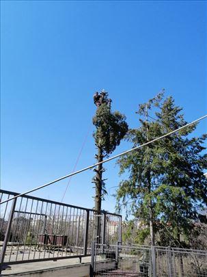 Seča visokih stabala