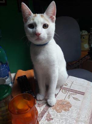 Nestao mačak Mango