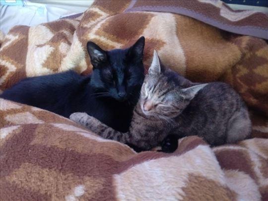 Dve mace traže novi dom