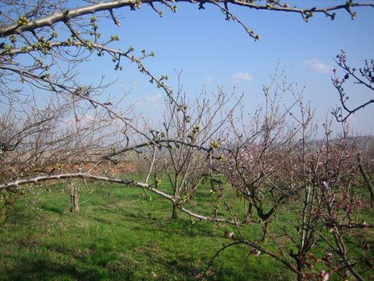 Grocka voćnjak
