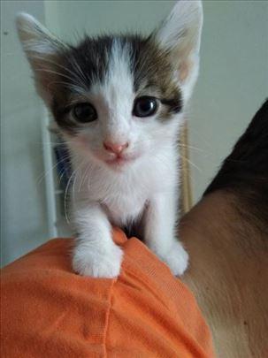 Usvojite jednog od 7 slatkih mališana :)