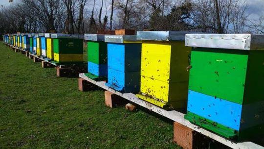 Košnice DB10 sa pčelama