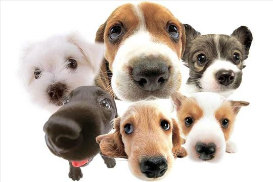 Čuvanje i šetanje pasa