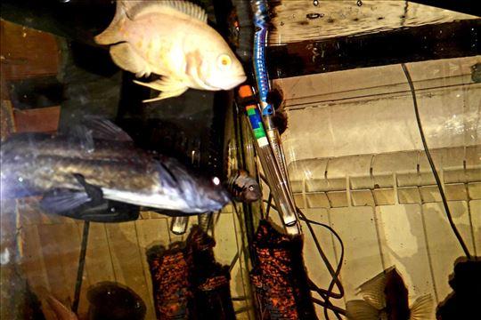 Prodajem ugaoni akvarijum zapremine 80l,sa opremom