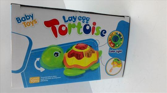 Muzička kornjača koja leže jaja akcija-Muzićka
