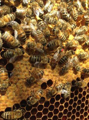 Pčele rojevi LR