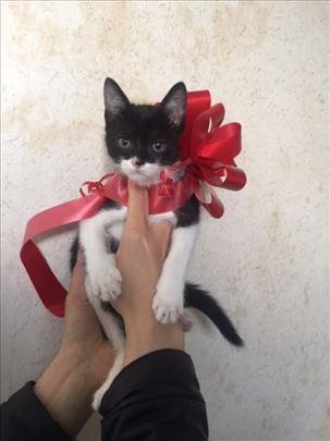 Malena Betmenka Beti, maca od dva meseca traži dom