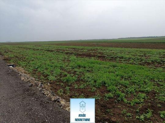 Ledine, poljoprivredno zemljište, 104ara ID#41921