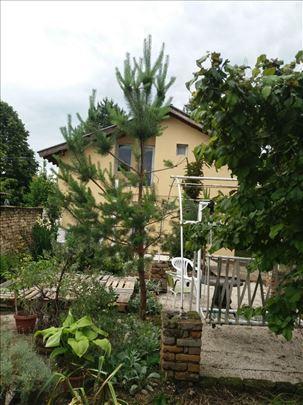 Bački Petrovac, kuća za odmor