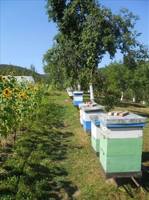 Prodajem 11 pčelinjih društava LR košnica