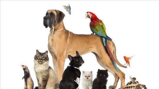 Čuvanje svih vrsta kućnih ljubimaca