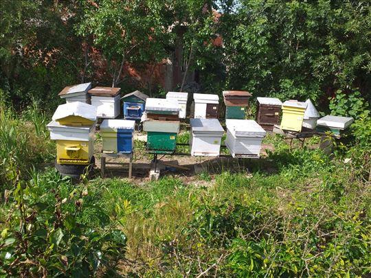 Pčelinja dručtva