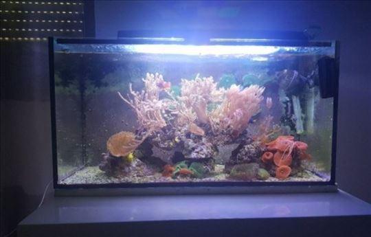 Morski akvarijum