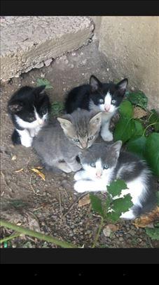 Maleni macici na poklon