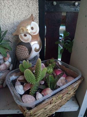 Prodajem kaktuse