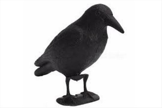 Plastični gavran (strašilo za golubove)