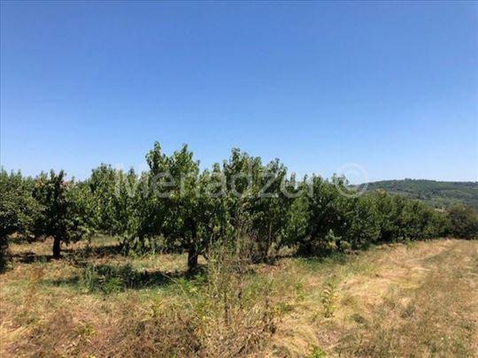 Backa Topola, poljoprivredno zemljiste 1ha, konver