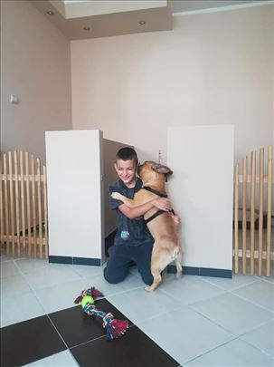 Hotel za pse Beograd
