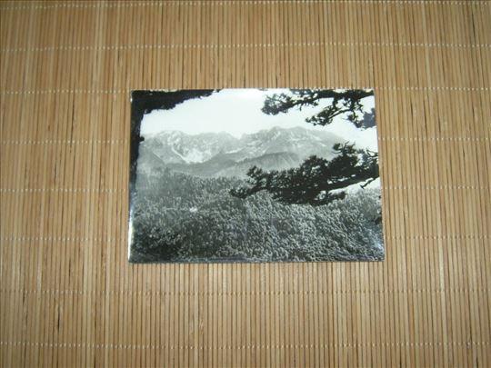 Tjentište - Prašuma Perućice / Crno-Bela