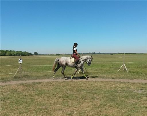 Skolski/hobi konj na prodaji!