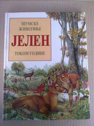 Jelen - Šumske životinje tokom godine