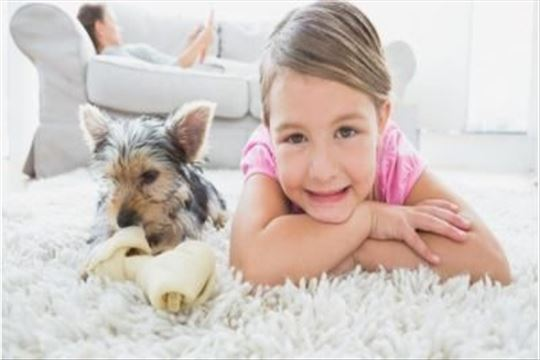 Najsavremenije dubinsko pranje  tepiha