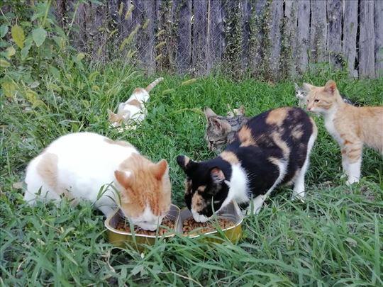 Poklanjaju se macici i mace