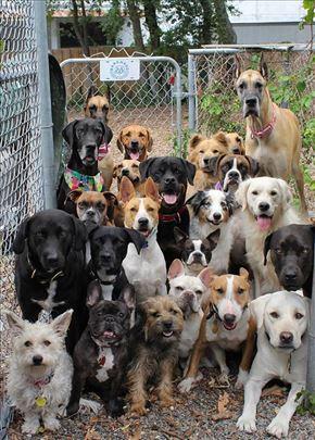 Čuvanje pasa
