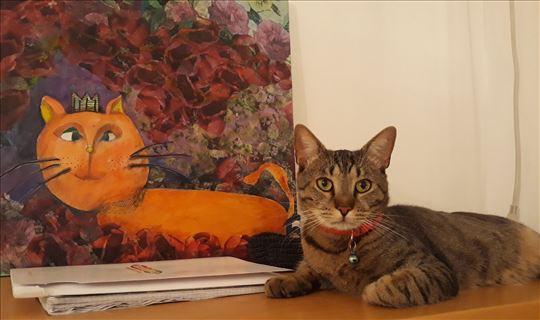 Mačak Edi
